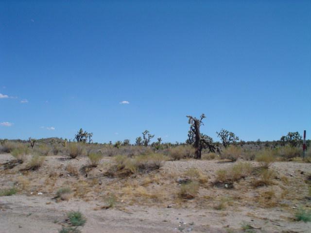 somewhere in the Mojave Desert